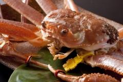 越前ずわい蟹イメージ